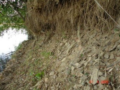 Dưới các bụi tre dọc sông Côn ở xóm Mỹ Kim nước lũ xói lộ dấu tích làng Gốm xưa