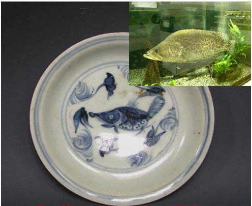 cá pecca là trang trí phổ biến từ triều Xuande đến triều Hongzhi nhà Minh. tên tiếng Hán của loại cá Chinese perch này là yue phat1 âm giống jie có nghĩa là trong sạch.