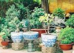 Góc vườn là nơi chủ nhân trưng bày cây kiểng trong những món đồ Thái blue ( Thái Bleu de Hue).