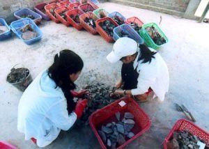 Các cán bộ khảo cổ đang phân loại các di vật.
